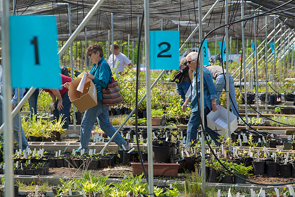 People shopping at the Earth Sangha native plant sale.