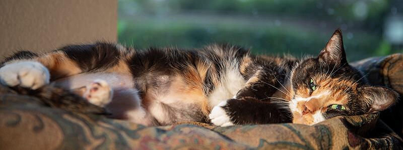 A content indoor cat. Outdoor cats kill untold numbers of wildlife.