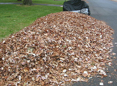Fall leaves raked to the curb. Leaves should be keep on your property.