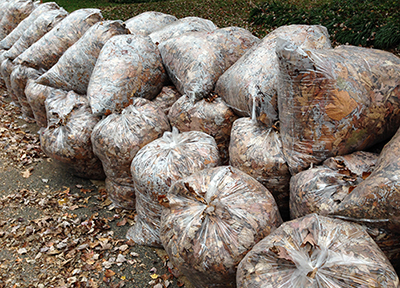 Bags of fall leaves stuffed in plastic bags.