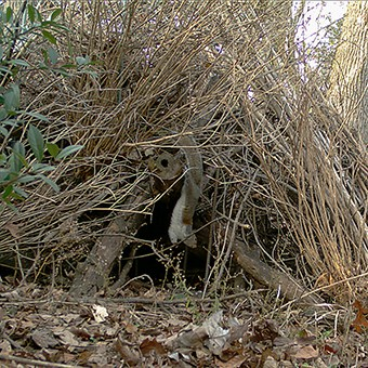 Brush piles provide shelter to many creatures.